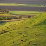 Un viaggio tra i vini della Barossa Valley