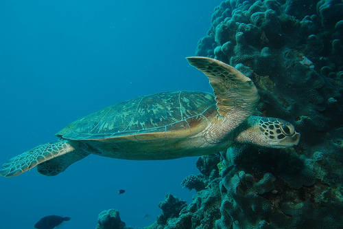 Grande Barriera corallina1