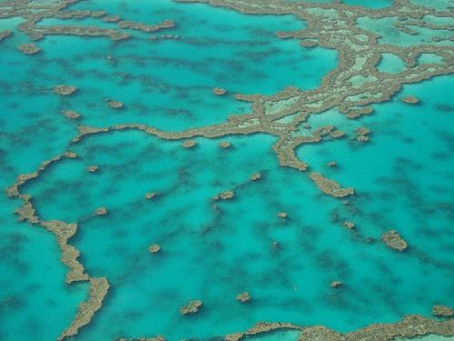 Grande Barriera corallina4
