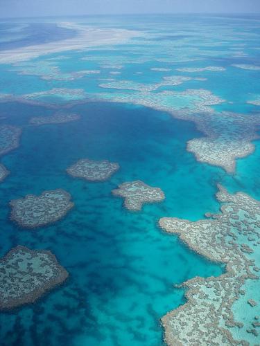 Grande Barriera corallina5