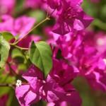 Cosa vedere a Barbados: flora e fauna