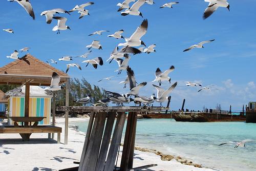 Bahamas - Exuma3